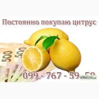 Куплю лимоны оптом. Куплю мандарины оптом. Покупаю цитрусовые