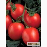 Продам помидор сорта солерос, перфектпил, освон