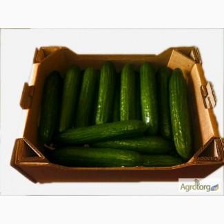 Ящики для Огурцов, тара для огурцов, тара для овощей, ящик для овощей