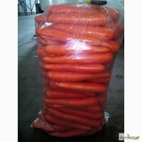 Продам морковь Абако, Лагуна