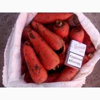 Продам морковь Абако 1-2 сорт