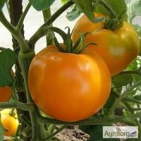 Продам семена Томат Апельсин