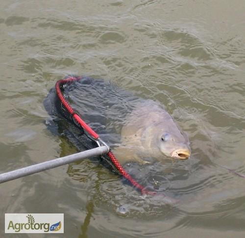 ароматизаторы для рыбалки форум