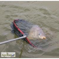 Ароматизаторы для успешной рыбалки
