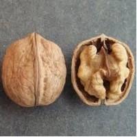 Покупаю ядро грецкого ореха
