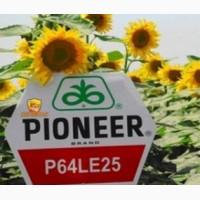 Соняшник Піонер П64ЛЕ25 під експрес, стійкий до вовчка