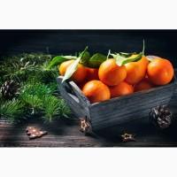 Реализуем мандарины апельсины Харьков