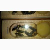 Бджоломатки бджолопакети карпатськоъ породи тип вучківський