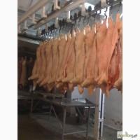 Продам мясо свинины в полутушах