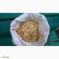Продам гарбузове насіння (українська багатоплідна)
