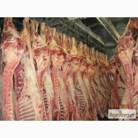 Мясо говядины(корова) полутуши 1, 2 кат. напрямую от производителя, от 43 грн/кг