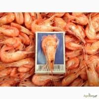 Креветка черноморская