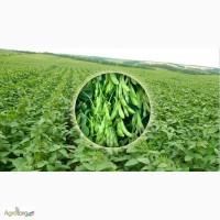 Продам посівмат сої Султана, Сігалія, Міленіум Ірепродукція