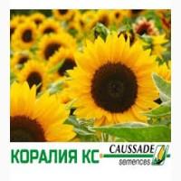 Гибрид подсолнечника Коралия КС/Coralia CS, Коссад Семанс (Франция), 95-102 дн