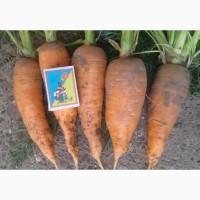 Оптом продам моркву