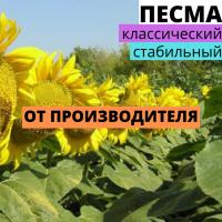 Семена подсолнечника гибрид Песма F1