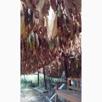 Продам листя тютюну