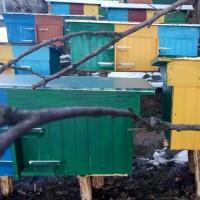 Продаж бджіл