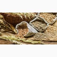 Закупаем кукурузу, пшеницу, ячмень, жито, овес