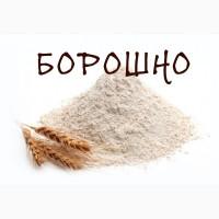 Мука   Борошно