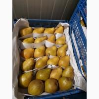 Продам грушку ноябырска жовта спакована подилена