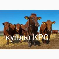 Берём быков коров падёж круглосуточно цена договорная