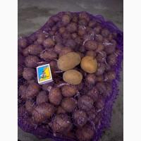 Продам насіння картоплі