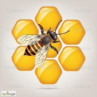 Куплю мёд оптом