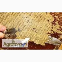 Бджолиний забрус з медом. домашній 100 % продукт без будь-яких домішок