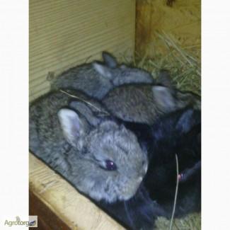 Продам кроликов для сезонного разведения
