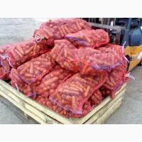 Морковь Абако (ПЕРВЫЙ СОРТ) от производителя