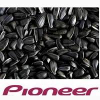 Семена подсолнуха Pioneer различных гибридов, Черкасская обл