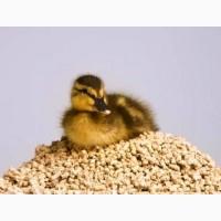 Заказывайте отличные инкубационные яйца уток Мулард