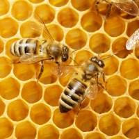 Продам пчёлосемьи 2019 2000 грн