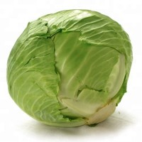 A grade fresh cabbage from poland