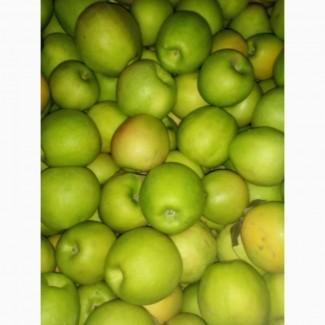 Продам яблоко Симиренко оптом с холодильника