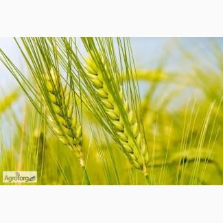 Гербицид на пшеницу, ячмень - Гранстар, Прима, Хармони, Агент. Лучшая цена и качество