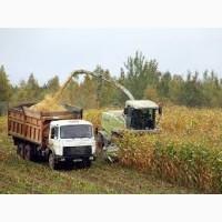 Уборка кукурузы на силос Полтава услуги силосоуборочных комбайнов