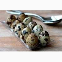 Продам яйцо перепелинное пищевое