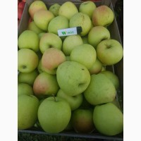 Яблоки опт 500 тонн