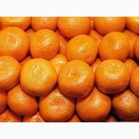 Закупаем мандарины оптом