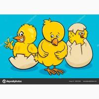 Производим инкубацию яиц всех видов домашней птицы