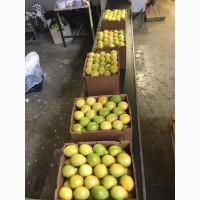 Лимон, Грейпфрут, цитрусовые - экспорт из ЮАР