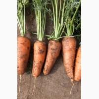 Морковь абако, Ред, ричи, каскад крупным оптом, Павлодар, Казахстан