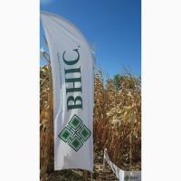 Семена кукурузы ВНИС от производителя