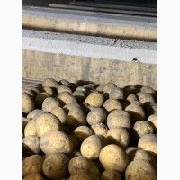 Реалізовуємо насіннєву картоплю