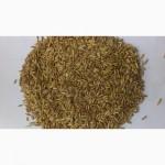 Семена овса Парламентский эл