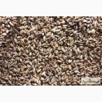 Продам семена Расторопшой пятнистой, Одесская обл, Измаил