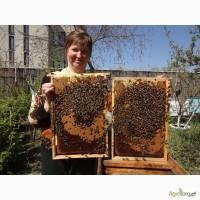 Продам или обменяю на зерно или породистых кроликов пчелиные семьи