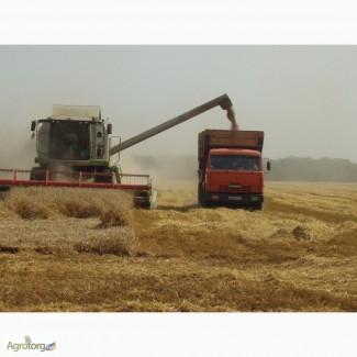 Закупим кукурузу.(фуражную) качество ГОСТ